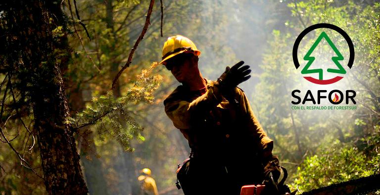 SAFOR – Certificación de Riesgos Forestales